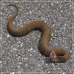 Snake sighted in Weston