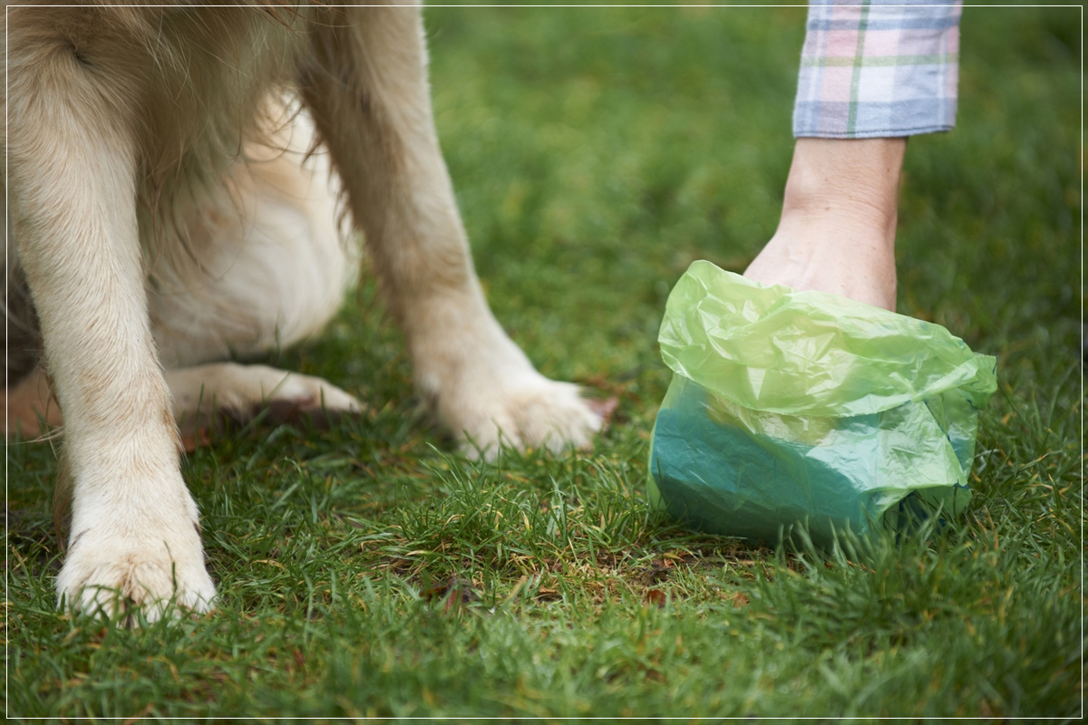 legs of a dog and hands of someone picking up pet waste